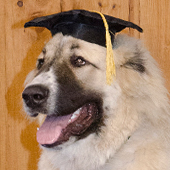 dog wearing a graduation hat